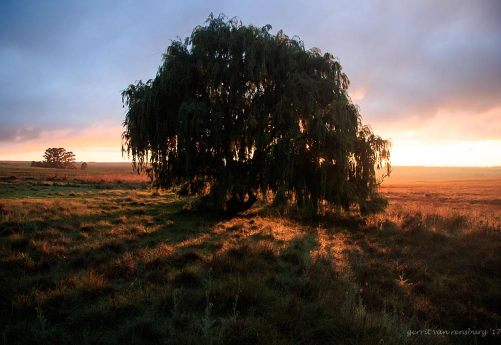 farmtree